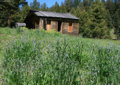 61216 garnet town 3234 cabin flower_MontanaPictures_Net