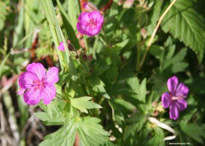 61306 bear flower 4262 rosehip_MontanaPictures_Net