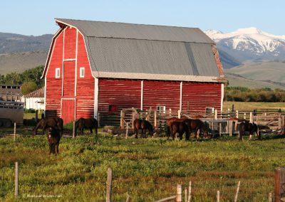 61608 harrison barn 2446 horsesslide_MOntanaPictures_Net