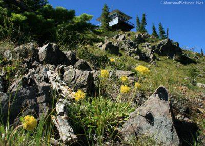 72308 bowman lo flower 9010 single_MontanaPictures_Net