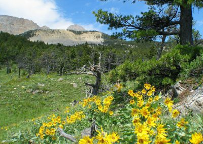 june_rocky_mountain_front_1350_MontanaPictures_Net