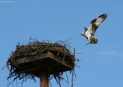 61310 deborgia osprey close 5186_MontanaPictures_Net