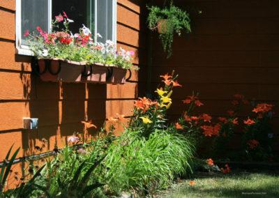 62907 ekalaka day lily 2277_MontanaPictures_Net