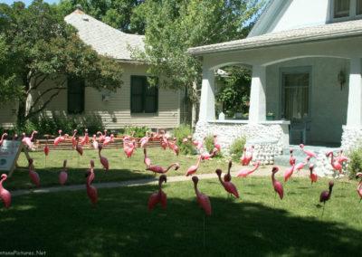 71008 liv house 7211 flamingos_MontanaPictures_Net