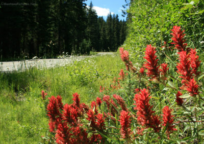 71808 yaak fireweed 6725_MontanaPictures_Net
