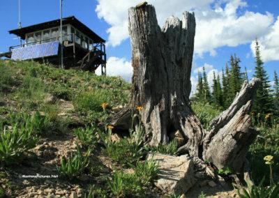 41903_72708 scalp lo stump 0969_MontanaPictures_Net