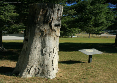 71908 eureka lumberjack 6485 tree_MontanaPictures_Net