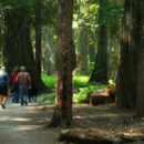 Ross Creek Cedars – Are we Still in Montana?