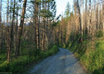 72108 kintla lake road tree pm 8127_MontanaPictures_Net
