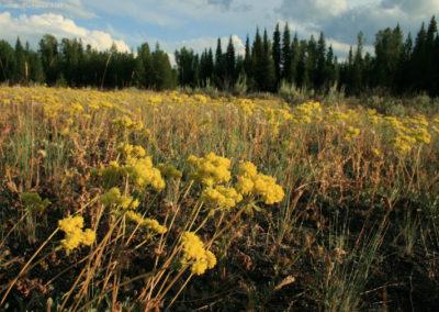 72208 buckwheat round prairie 8124_MontanaPictures_Net