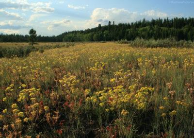 72208 prairie round prairie 8115 yellow_MontanaPictures_Net
