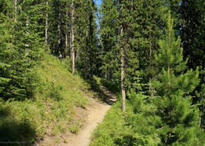 72308 bowman monkey sun wood 9334_MontanaPictures_Net