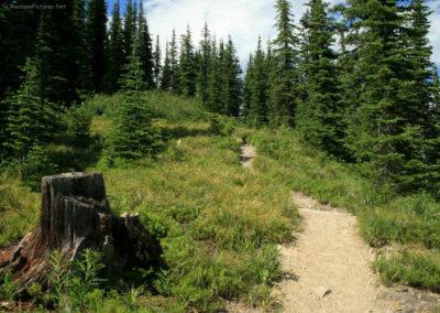 72708 scalp trail stump 0587_MontanaPictures_Net