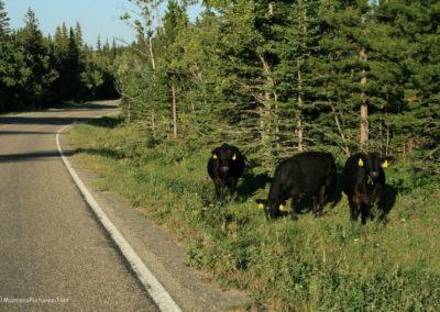 72809 mbc road hazard 2172_MontanaPictures_Net