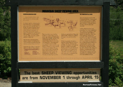 sign1_71708_52514_lookout_sheep_3461_read_far_sign_MontanaPictures_Net