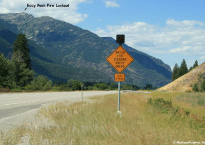 start_71708_52514_lookout_sheep_3454_sign_MontanaPictures_Net