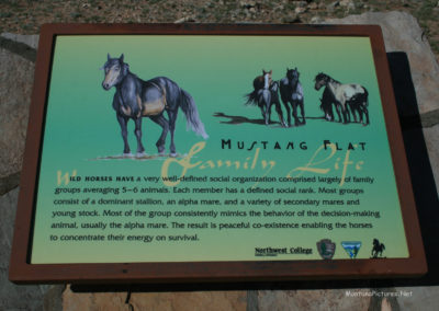 61812 bighorn horse 4425 mustang flat sign read_MontanaPictures_Net