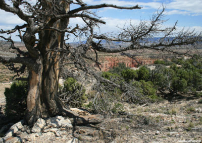 61812 bighorn rock 5144 pine dead and canyon_MontanaPictures_Net