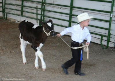81706 kalispell fair 8614 little cowboy and calf_MontanaPictures_Net