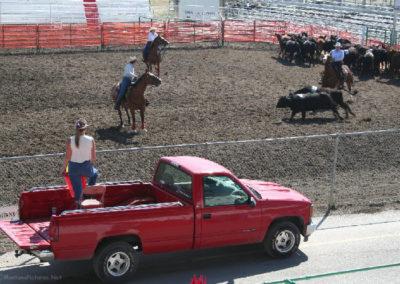 82106 kalispell pen 9210 herd_MontanaPictures_Net