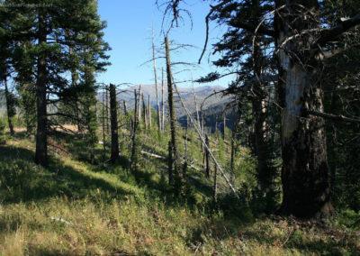 82111 danaher return bob climb 3116 tree_MontanaPictures_Net