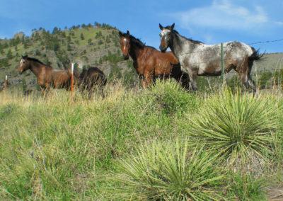 100307 Cascade 50404 cascade horses_MontanaPictures_Net