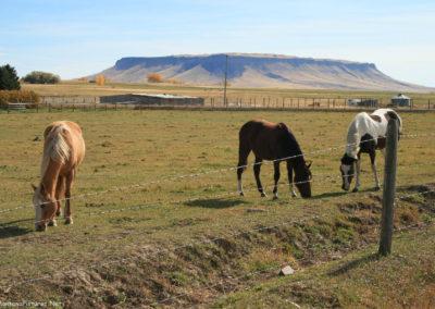 101207 crown butte square butte horses 6249_MontanaPictures_Net