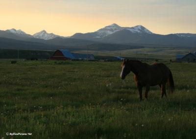 62007_big_hole_5596_horse_MontanaPictures_Net
