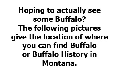 Buffalo Montana Direction BUTTON_MontanaPictures_Net