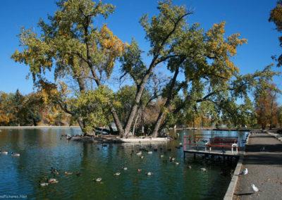 100907 gf park gibson ducks 3841_MontanaPictures_Net