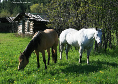 60511 zortman_horses_2477_MOntanaPictures_Net