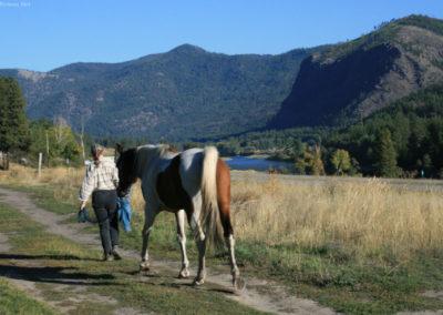 92510-albert-9773-horse_MontanaPictures_Net