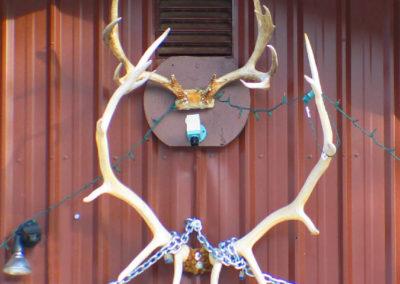 10606 neihart antlers_MontanaPictures_Net