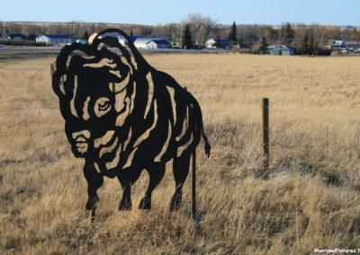 30709 dupuyer 4972 buffalo_MontanaPictures_Net