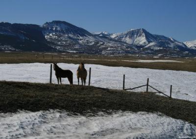30710 swift 4555 horses snow_MontanaPictures_Net