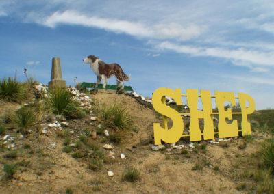 51505 ftb shep_MontanaPictures_Net