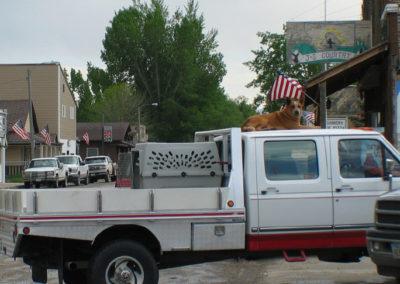 60803 Augusta Dog 1392 truck_MontanaPictures_Net