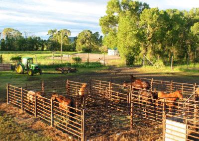 70504 choteau 6697 horse pens_MontanaPictures_Net