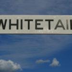 Whitetail Montana Picture Tour – MontanaPictures.Net