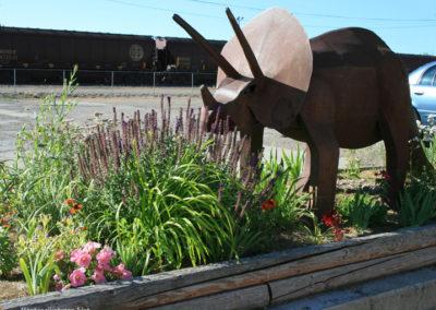 62607 glendive triceratop flowers 1207_MontanaPictures_Net