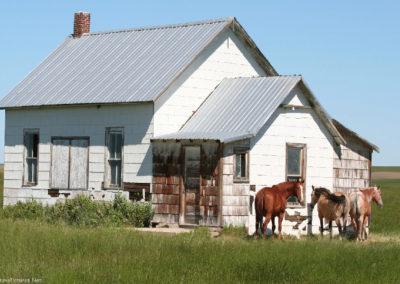 62819 war horse 5503 horse school_MontanaPictures_Net