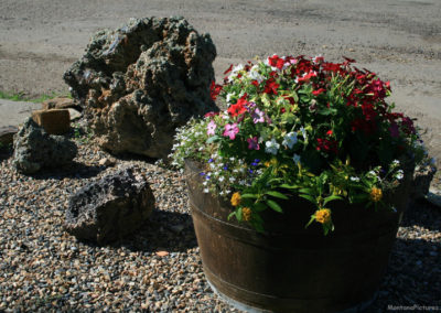 71711 terry flower near church 1083_MontanaPictures_Net