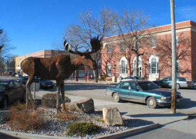 12305 dillon moose_MontanaPictures_Net