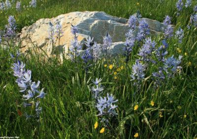 62508 haggin highway 5328 big rock camas close_MontanaPictures_Net
