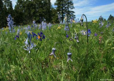 62508 haggin mule ranch flower 4982 mix_MontanaPictures_Net