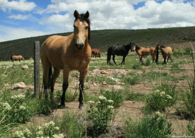 62608 butte gregson horses 6349_MontanaPictures_Net