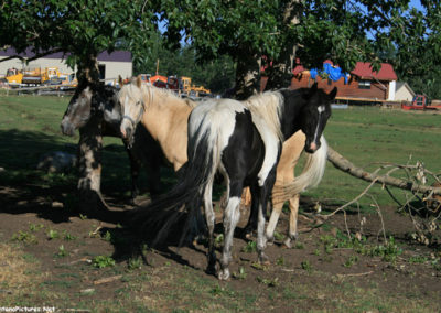 71112 Luther RL horses 9560_MontanaPictures_Net