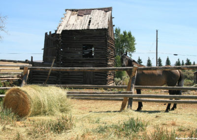 71907 Lima barn horse 7607_MontanaPictures_Net