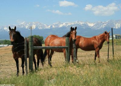 80708 bridgers sedan 4661 horses_MontanaPictures_Net