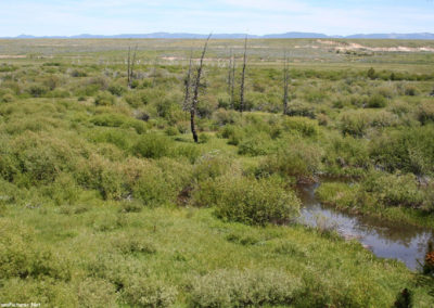 62007 big hole marsh 3851_MontanaPictures_Net